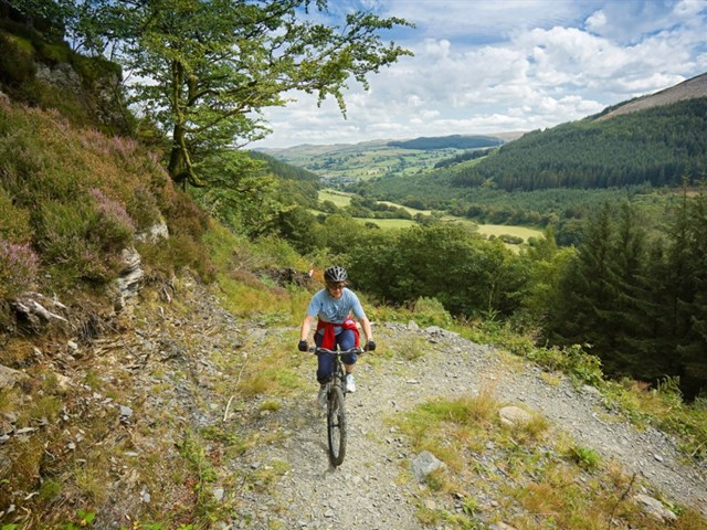 Mountain biking in the Gwydir forest