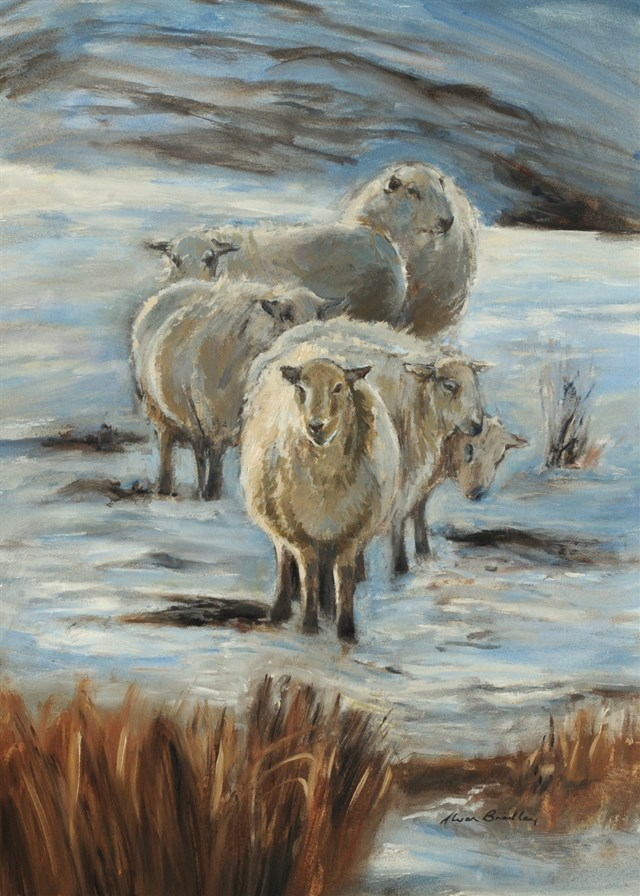 Sheep winter sun